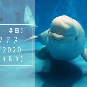 【島根・浜田旅行】アクアスへ行こう!【シロイルカ】
