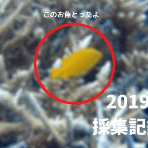 【採集記録】2019年の海水魚採取記録 in 房総半島