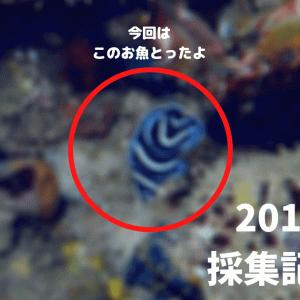 【採集記録】2019年の海水魚採集記録② in 房総半島