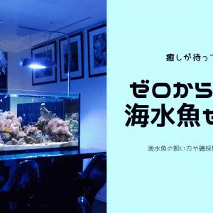 あなたも海水魚を飼ってみませんか!?ゼロから始める海水魚生活