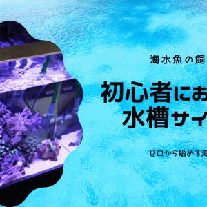 初心者におすすめの水槽サイズは!?【海水魚の飼い方】