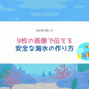海水魚水槽の立ち上げ!9枚の写真で伝える失敗しない海水づくり!!