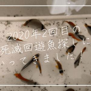 今年は豊作!?2020年2回目の海水魚採集へ行ってきました!!