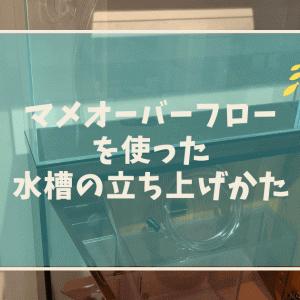 マメオーバーフローMを使った水槽の立ち上げ!!