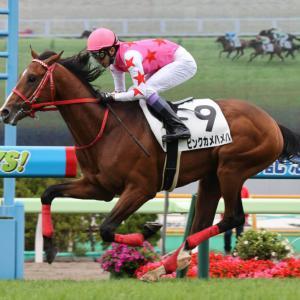 札幌2歳ステークス【G3】ピンクカメハメハが有力!競馬予想