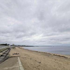 砂浜にイルカが打ち上げられている時の正しい判断