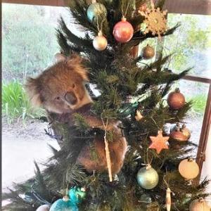 本日のほっこり記事 クリスマスツリーに何かが・・・
