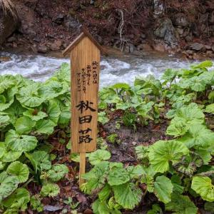 2021年GW 東北の旅(3泊4日)⑯田沢湖へ立ち寄り