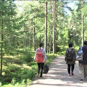 2017年夏、北欧&ドイツの旅 ⑭森と湖の散策ツアー