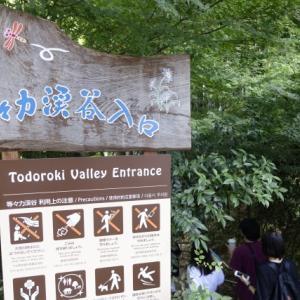 世田谷区の避暑地である等々力渓谷が東京とは思えない自然の豊かさ。