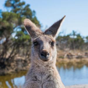 オーストラリアに滞在できるビザ