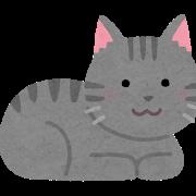 【悩】脱走対策×猫 脱走癖×障害児×保険 我が家の場合