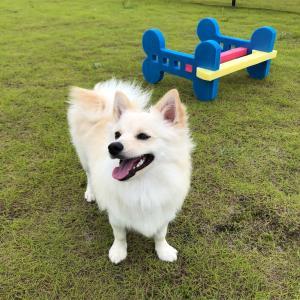 新コーナー!【今月の#つるワン。】犬好き集まれ!