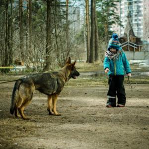 【子供と保護犬】育児しながら里親になって5年【手順と現在】