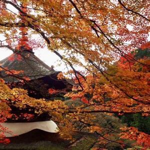 【京都観光】穴場あり!京都で紅葉を楽しむならここ!