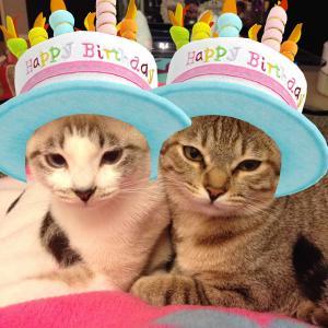 **Happy birthday シュシュ&チャチャ**