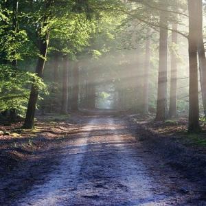 日の出瞑想ウォーキングのススメPart2