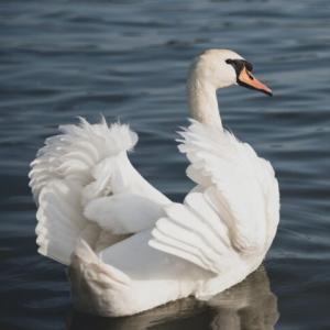 【雑記】白鳥の湖が無事終わりまして【ダイエット結果発表】
