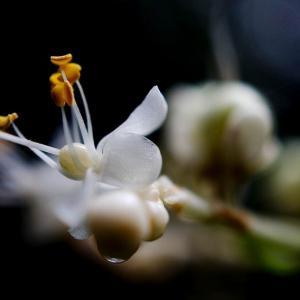 花の写真02