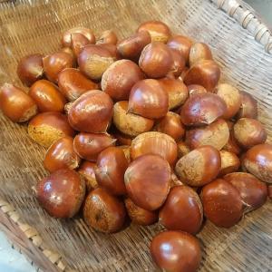 秋の味覚♡栗のペーストの作り方🐰