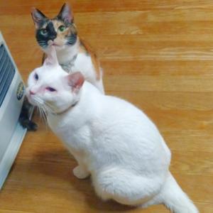 猫風邪、お陰様で回復しました(=^・^=)