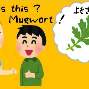 「よもぎ」は英語で「Mugwort」って本当に正しいの?
