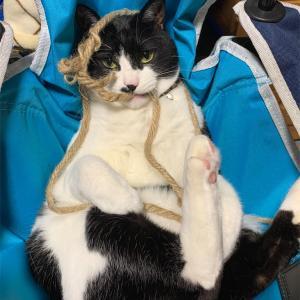 うちの猫4