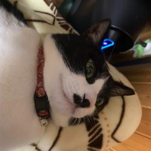うちの猫6