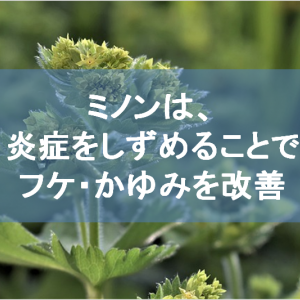 ミノンの肌への優しい効果|薬用植物由来の物質が炎症を抑える