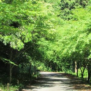 大田区はどうやら蝶々の街らしい。
