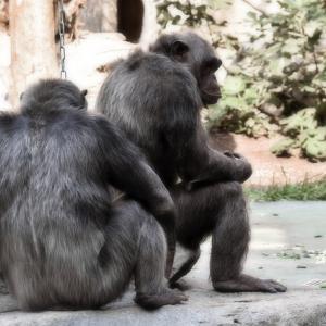 5匹の猿に意味深な実験。ん?これってもしかして、、、