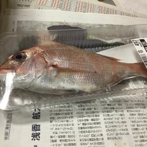 真鯛を初めて調理する