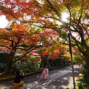 龍福寺参道の紅葉