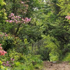 東鳳翩山の草花