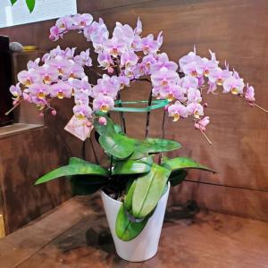 桜ミディーさくらいろのお花