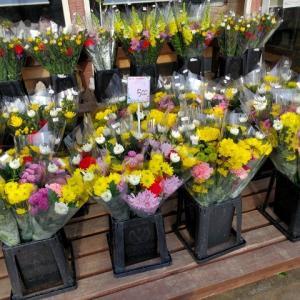 花国恒例-春のお彼岸セール-お得なお花がたくさん!
