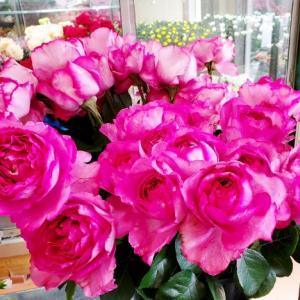 すてきなバラの香りにさそわれて 花国湘南台店お花の日記