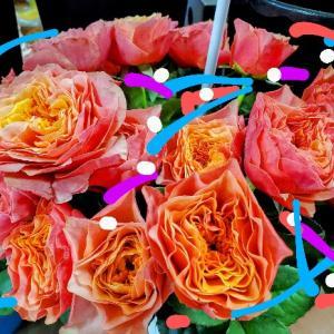 本日の笑顔いっぱいのお花さんたち7月3日花国湘南台店リアル店舗