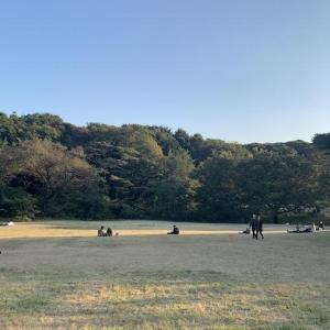 【東京都心の散歩】 近場で自然満喫、明治神宮〜!