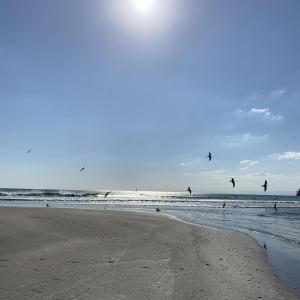 【湘南散歩】片瀬東浜、七里ヶ浜、由比ヶ浜、材木座海岸を散歩!