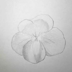 絵の練習7日目