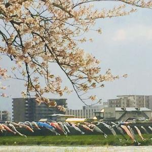 言わずと知れた、岩手県一の桜の見所「展勝地」