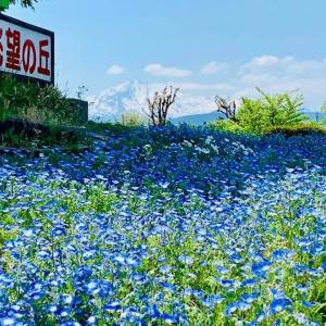 春の訪れを知らせる可憐な花です(#^^#)