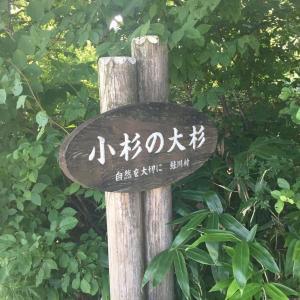 田んぼに鎮座するトトロを見に行きませんか?(#^^#)