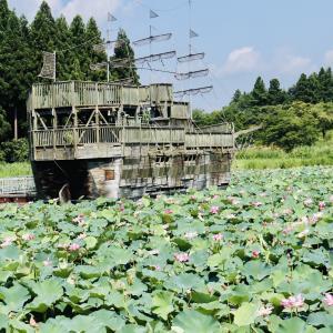 秋田県では最大規模の蓮の群生地です!