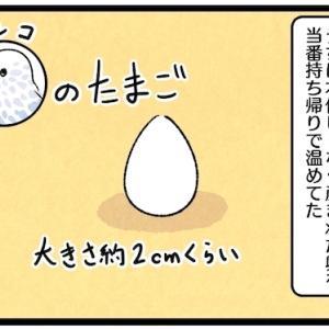 産まれた卵を当番持ち帰りで温めてた・・・が、ある日