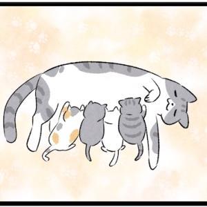猫「今日から家族になってあげるにゃ」