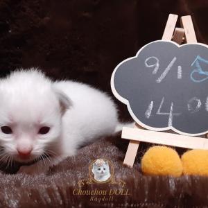 生後2週間になりました☺️ 魔の14日間は無事過ぎたかなぁ☺️ さて、こちらは小粒サイズの 仮名そなた君イメージカラーは黄色💛 に...