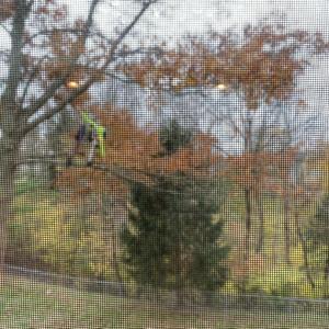 風邪と木は高い!