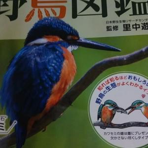 野鳥図鑑 members card